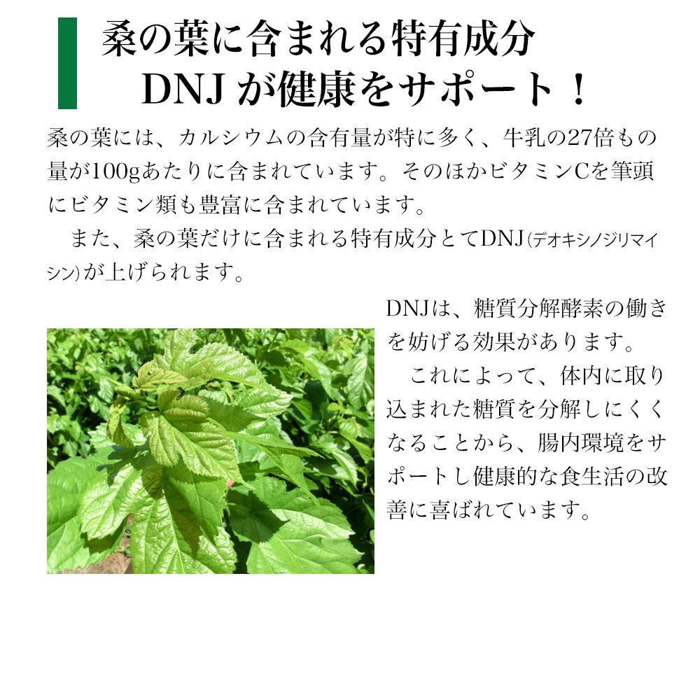 桑の葉に含まれる特有成分 DNJが健康をサポート!