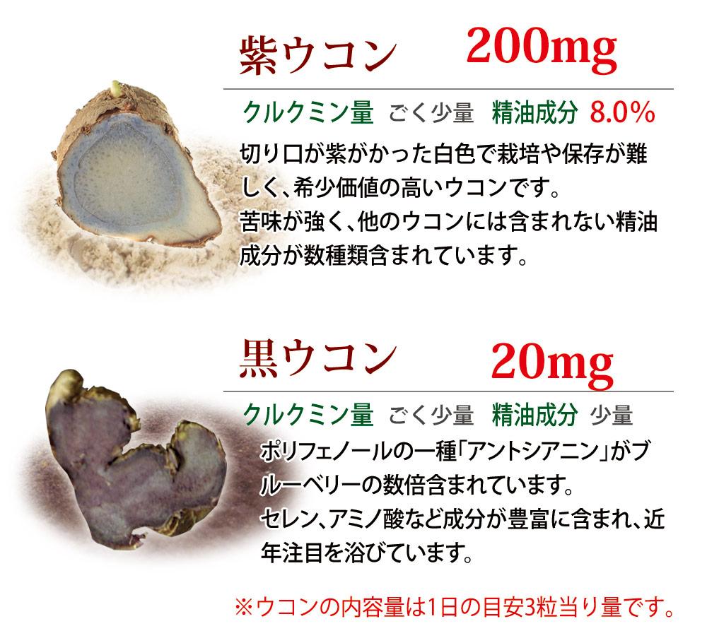 ウコンの説明文 紫ウコンと黒ウコン